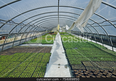 Greenhouse stock photo, Different kind of plants growing in a greenhouse by Massimiliano Leban