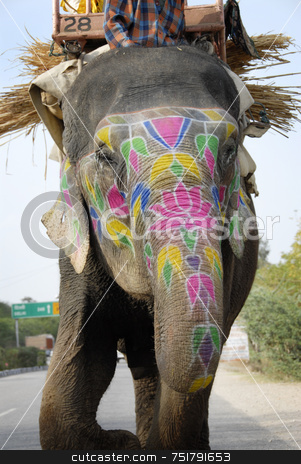 Painted Elephant in India stock photo, Painted Elephant in India by A Cotton Photo