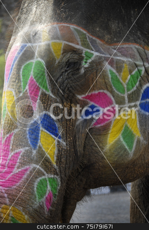Painted Elephant Face stock photo, Painted Elephant Face by A Cotton Photo