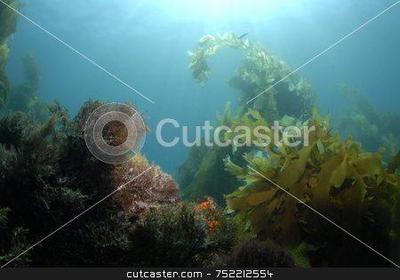 Underwater World Background stock photo, Underwater World by A Cotton Photo