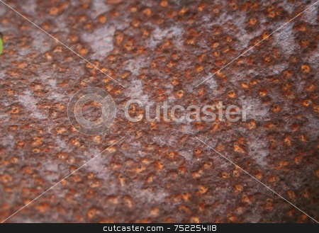 Pattern of Rust stock photo, A pattern of rust on old metal, useful for background or design by Tom and Beth Pulsipher