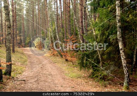Road in forest stock photo, Earth road in summer forest somewhere in Poland by Joanna Szycik