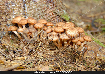 Mushrooms in forest stock photo, Some mushroom on the log in forest by Joanna Szycik