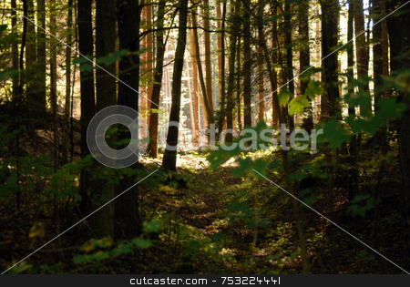 Dark forest stock photo, Fence in Forest in beautiful morning light by Joanna Szycik