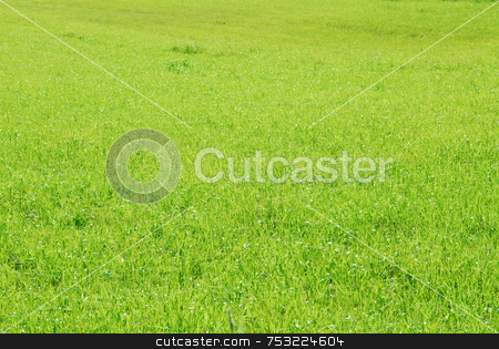 Green blades of grass stock photo, Closeup on green blades of grass in summer by Joanna Szycik