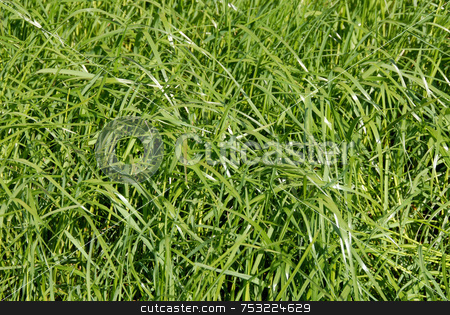Grass meadow stock photo, Natural grass illuminated by the sun in spring by Joanna Szycik