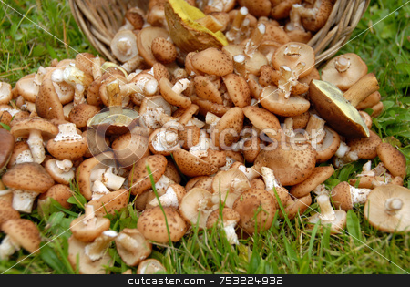 Mushrooms in grass stock photo, Mushrooms on background of green grass. Autumn. by Joanna Szycik