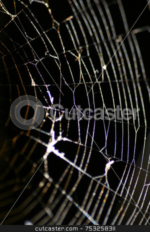 Glowing Cobweb stock photo, A macro of a cobweb at night. by Lucy Clark