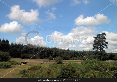 UK Countryside stock photo, A view of the New Forest in the UK. by Lucy Clark