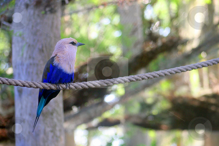 Bird on Rope stock photo, A Bike perched on a rope by Lucy Clark