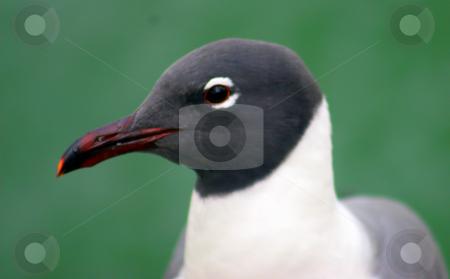 Bird Headshot stock photo, A headshot of a bird. by Lucy Clark