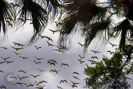 Flying Birds stock photo, A lot of birds flying over head. by Lucy Clark