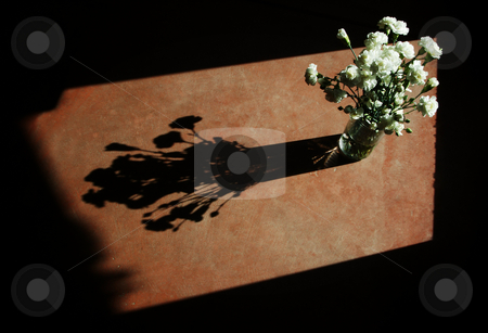 White Carnations stock photo, White carnations with hard side-light and strong, dramatic shadow. by Scott Griessel