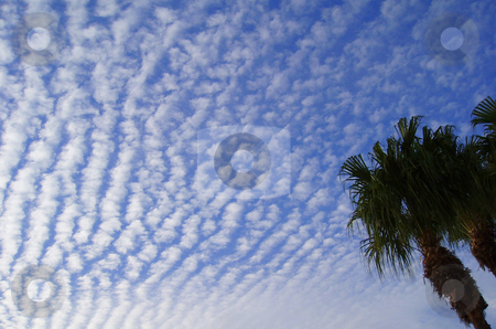 Unusual Clouds And Tree stock photo, Unusual clouds and a plam tree in Florida. by Lucy Clark