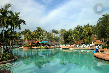 Tropical Swimming Pool stock photo, Palm Trees and Swimming Pool in the Bahamas by Lucy Clark