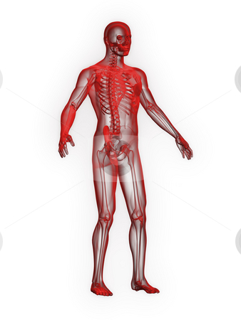 X-ray of man red front side view stock photo, X-ray of man red front side view on white background by John Teeter