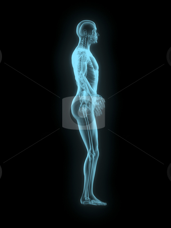 X-ray of man 3d side view blue on black background stock photo, X-ray of man 3d side view blue on black background by John Teeter