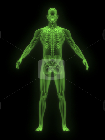 X-ray of man green front  stock photo, X-ray of man green. front view on black background by John Teeter