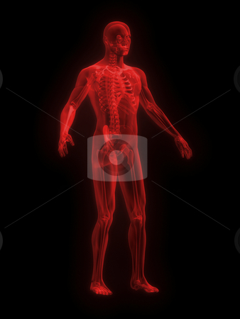 X-ray of man red front side view stock photo, X-ray of man red front side view on black background by John Teeter