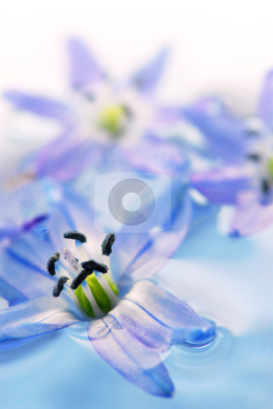 Floating flowers stock photo, Extreme macro image of blue flowers floating in water by Elena Elisseeva