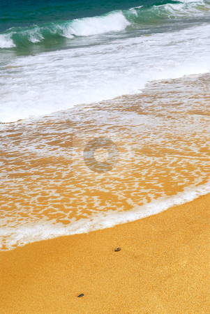 Sandy ocean beach stock photo, Ocean wave advancing on a yellow sandy beach by Elena Elisseeva