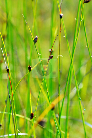 Botanical background stock photo, Botanical background of lush green plants and grass by Elena Elisseeva