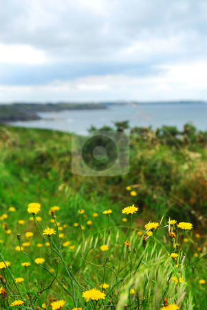 Atlantic coastline in Brittany, France stock photo, Summer lansdcape of Atlantic coastline in Brittany, France by Elena Elisseeva