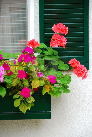 House flower box stock photo, Flower box on the house window with shutters by Elena Elisseeva