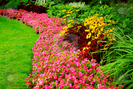 Garden stock photo, Blooming flowers in late summer garden flowerbeds by Elena Elisseeva