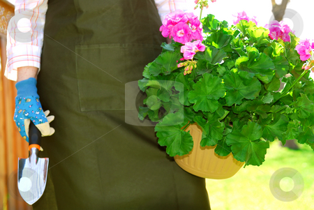 Gardening stock photo, Woman in gardening apron carrying pot with geraniums by Elena Elisseeva