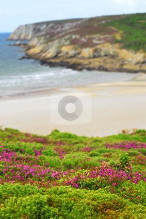 Atlantic coast in Brittany stock photo, Heather blooming at Atlantic ocean coast in Brittany, France by Elena Elisseeva