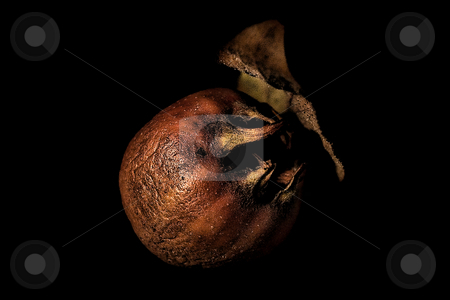 ... a loquat stock photo,  by emiliano beltrani