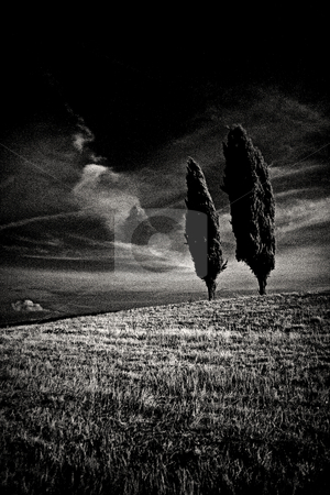 ... a cypress hilltop stock photo,  by emiliano beltrani