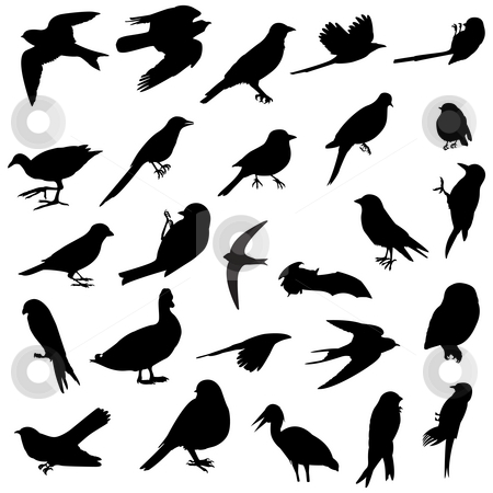 Birds silhouettes stock photo, 26 silhouettes of several birds races by Dario Rota