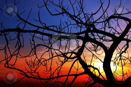 Fig at sunset stock photo, A brenched fig is standing against the sunset. The black brenhces creates an intricated dark pattern by Dario Rota