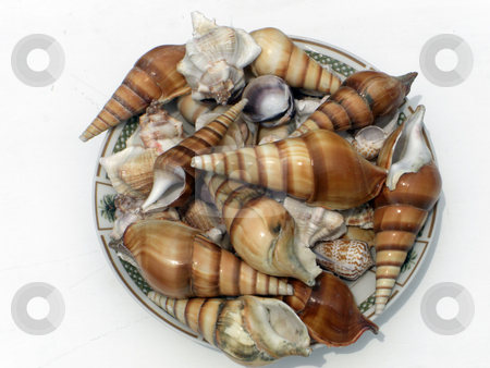 BowlOfSeashells stock photo, A bowl filled with a variety of seashells by Rebecca Mosoetsa