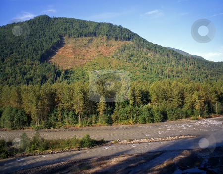 Nooksack River Clear Cut stock photo, A hillside being clear cut on the Nooksack River in Washington State. by Mike Norton