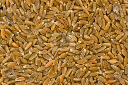 Unripe spelt grain stock photo, Gr???nkern (auch ???Badischer Reis???) ist das halb reif geerntete und unmittelbar darauf ger???stete Korn des Dinkels, einer auch als ???Urweizen??? oder ???Schwabenkorn??? bekannten Weizenart. by Wolfgang Heidasch