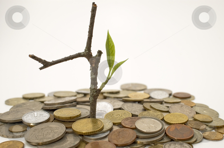 Coins and plant. stock photo, Coins and plant, isolated on white background. by Yury Ponomarev