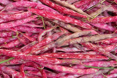 Borlotto Beans stock photo, 'Borlotto Lingua Di Fuoco' ist eine alte italienische Gartenbohne (Phaseolus vulgaris). Traditionell werden die ausgereiften Kerne der Borlotto-Bohne f???r Gem???seeint???pfe verwendet. by Wolfgang Heidasch