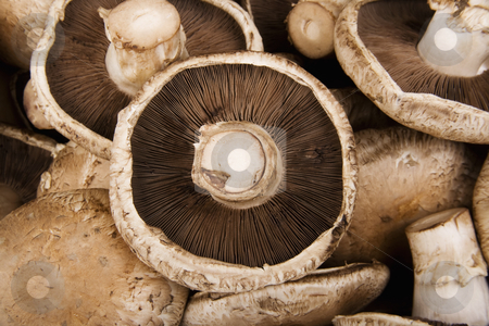 Portobello Mushrooms stock photo, Portobello Mushrooms in a pile filling the frame by Scott Griessel