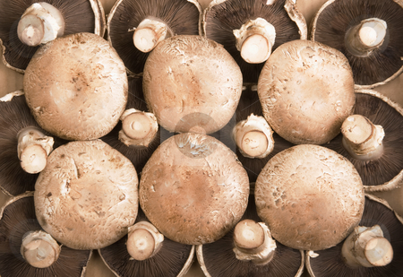 Portobello Mushrooms stock photo, Portobello Mushrooms arranged in a pattern on a cardboard background by Scott Griessel