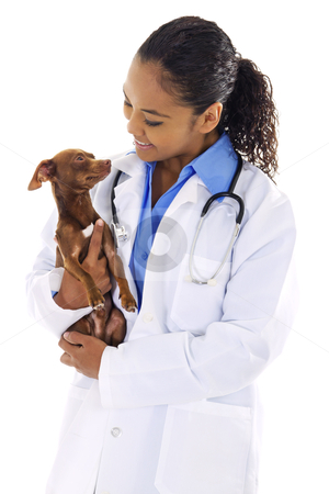 Veterinarian stock photo, Stock image of female veterinarian with small dog over white background by iodrakon