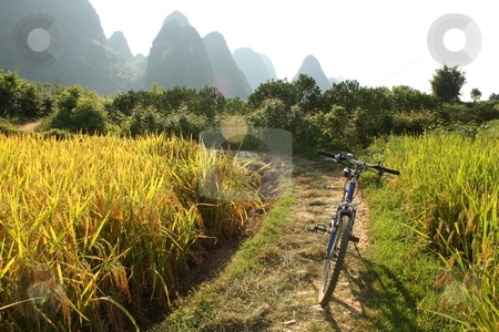 China country landscape with bicycle stock photo, Golden fields of Southern China with bicycle, Yangshuo, China by Yulia Zhukova