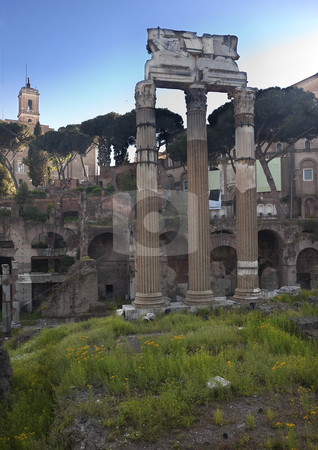 Forum of Julius Casesar Spring Flowers Rome Italy stock photo, Ruins, Corinthian Columns, of the Forum of Julius Caesar Spring Flowers Rome Italy   by William Perry