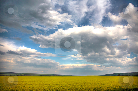 Spring landscape and the cloudy sky. A yellow field. stock photo, Spring landscape and the cloudy sky. A yellow field. by krasyuk