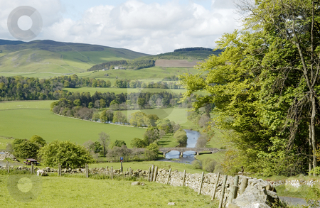 Tweed valley stock photo, Valley of the river Tweed with bridge, field, trees and sheep by Denovan