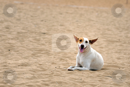 Dog stock photo, A street dog looking abandoned at a local beach by Arvind Balaraman
