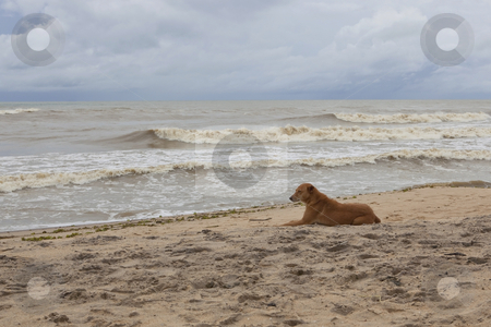 Dog relaxing on a beach stock photo, sri lankan seascape with a brown dog relaxing on the beach at arugam bay by Mike Smith