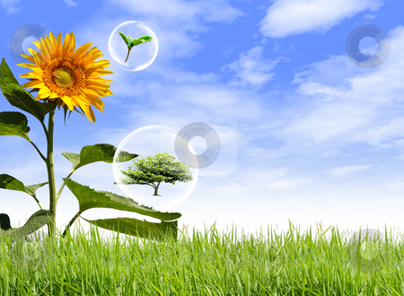 Sunflower on the lawn with bubbles. stock photo, Sunflower on the lawn with bubbles. by rufous